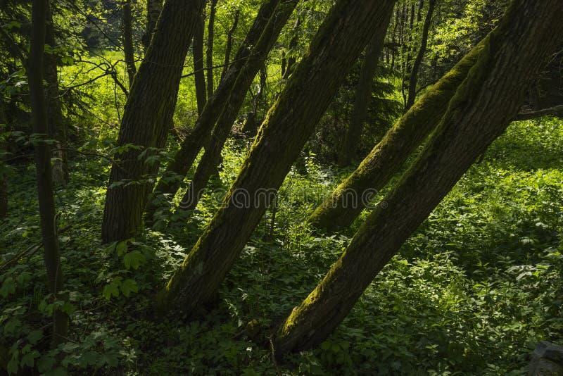 Arbres verts à la nuance image stock