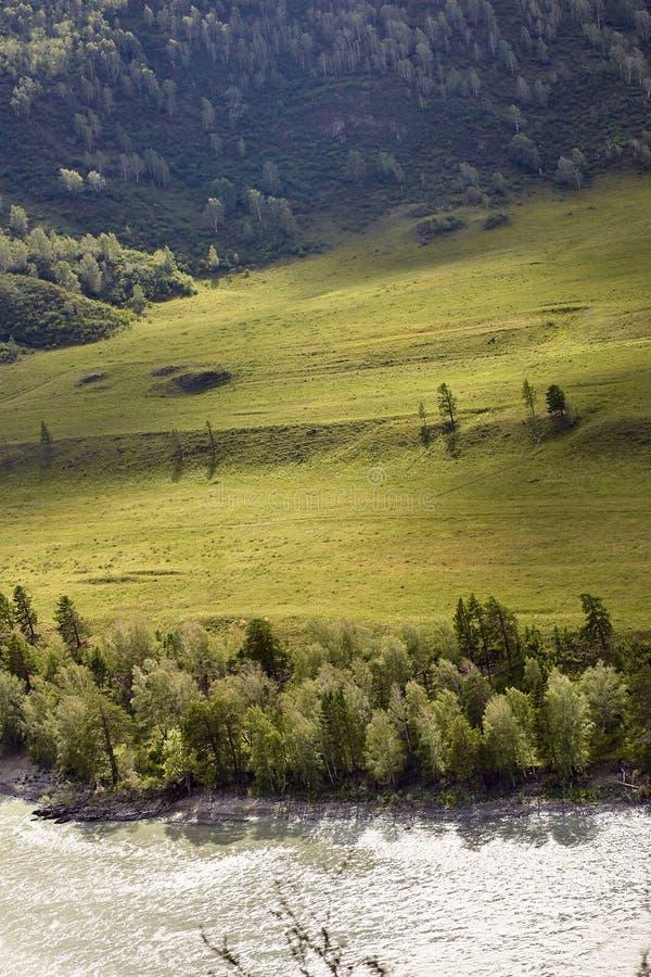 Arbres verts Écoulement de rivière Horizontal de montagne Belle nature photo libre de droits