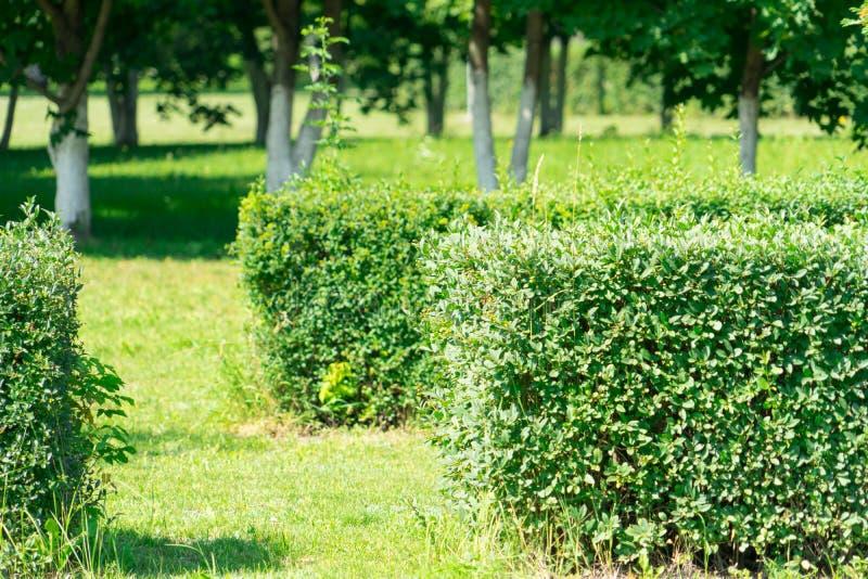 Arbuste équilibré par photo près de la route Conception d'horizontal photos libres de droits