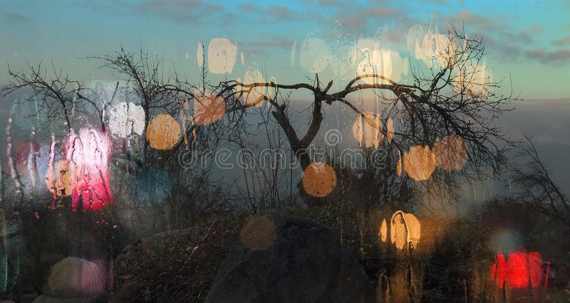 Arbustes avec les branches sèches photographie stock libre de droits