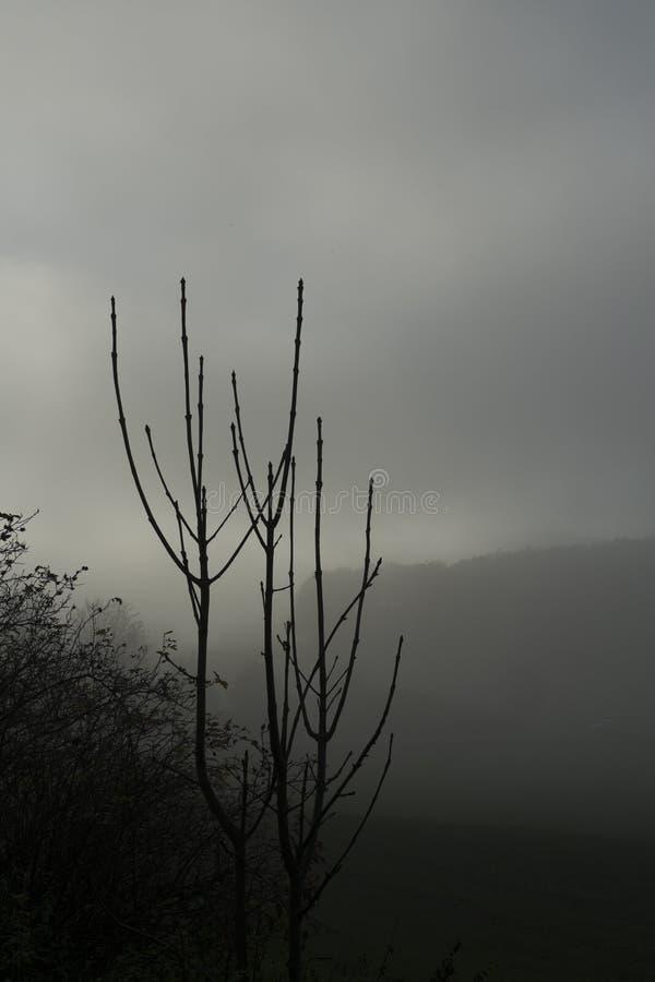 Arbustes dans le brouillard photo libre de droits