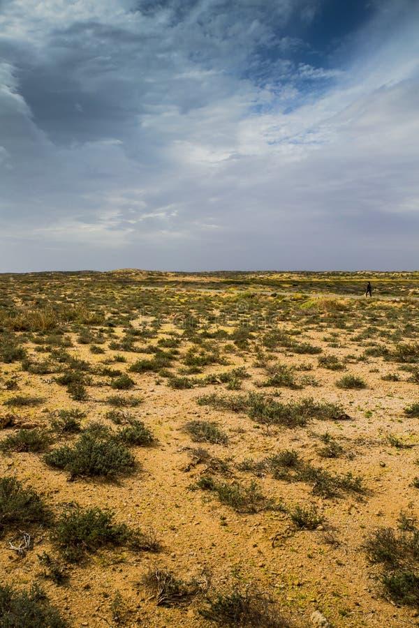 Arbustes de désert australien au-dessus d'un ciel orageux d'hiver photos stock