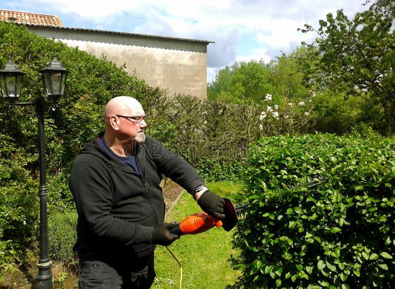 Arbustes de dos d'élagage d'homme supérieur dans le jardin photo stock
