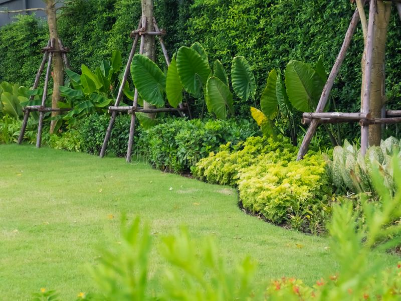 Arbustes et pelouses vertes, paysage de cour, jardin paisible avec fra?chement une pelouse photos stock