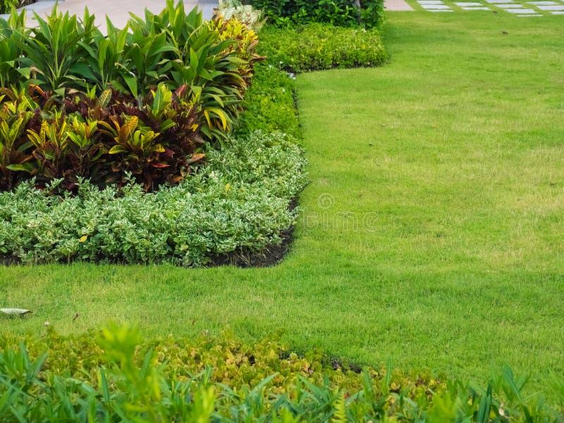Arbustes et pelouses vertes, paysage de cour, jardin paisible avec fra?chement une pelouse images stock