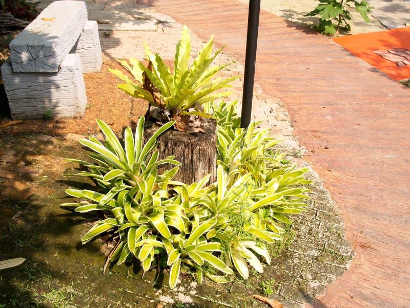 Arbustes près du passage couvert photographie stock libre de droits