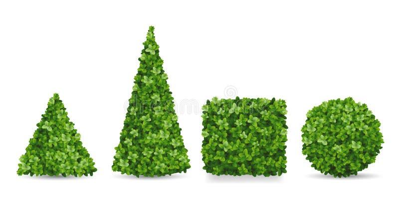 Arbusti del legno di bosso delle forme differenti dell'ars topiaria illustrazione vettoriale