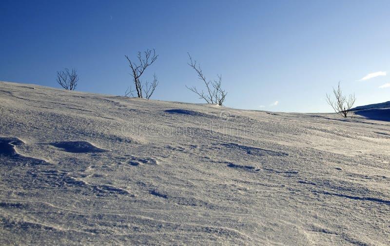 Download Arbusti E Cielo Sulla Montagna Immagine Stock - Immagine di cielo, alberi: 30827993