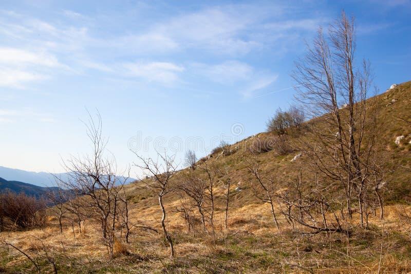 Arbusti ed alberi secchi fotografie stock libere da diritti