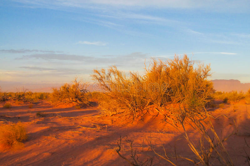 Arbusto árido no deserto no por do sol fotos de stock royalty free