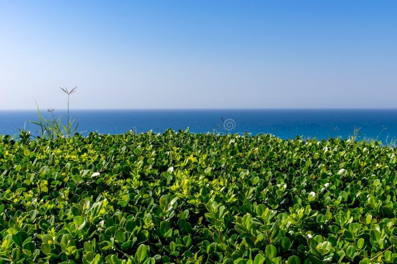 Arbusto acortado verde contra el mar del cielo foto de archivo libre de regalías