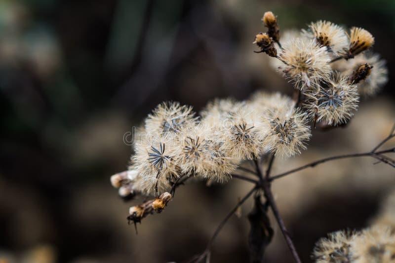 Arbusto amargo que es marchitado imágenes de archivo libres de regalías