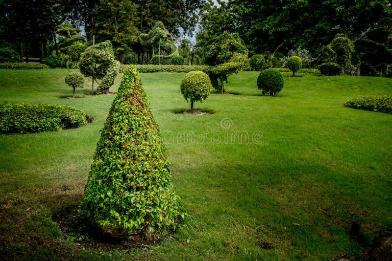 Arbusto aparado cone imagens de stock