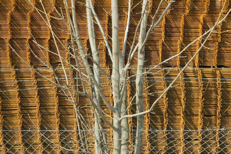 Arbusto arrestato sulla parte inferiore del metallo fotografie stock