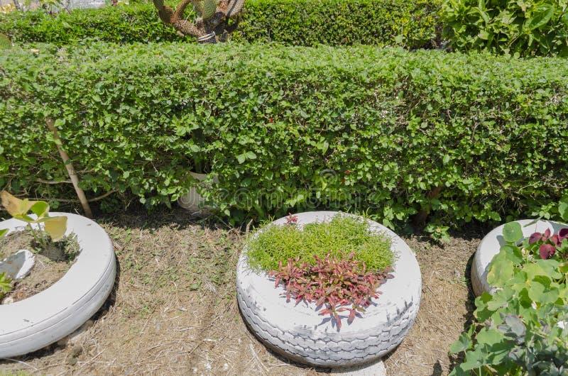 Arbusto bajo que cerca dividiendo el jardín de flores imágenes de archivo libres de regalías