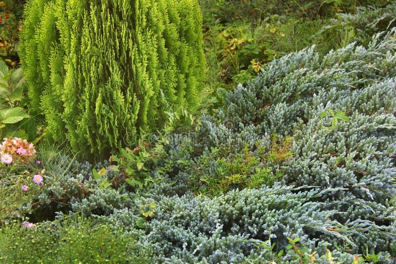 Arbusto bonito na jarda fotos de stock royalty free