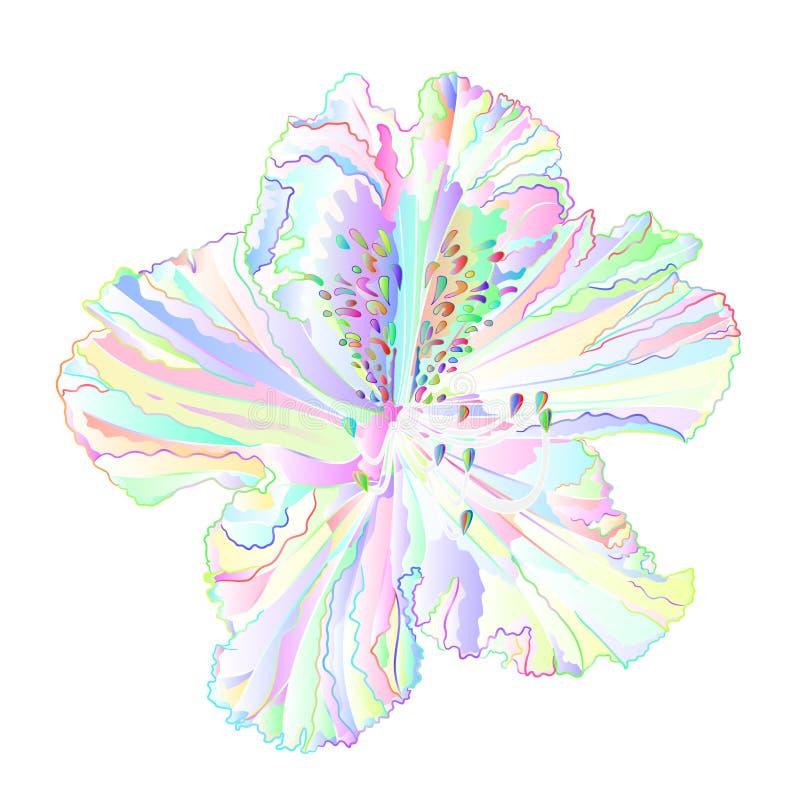 Arbusto claro colorido da montanha da flor do rododendro da flor multi em uma ilustração branca do vetor do vintage do fundo edit ilustração do vetor