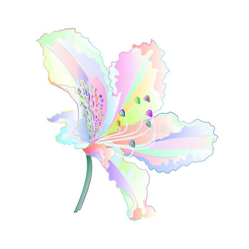 Arbusto claro varicolored da montanha do rododendro da flor da flor em uma ilustração branca do vetor do vintage do fundo editáve ilustração royalty free
