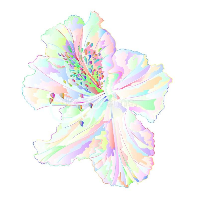 Arbusto claro varicolored da montanha da flor do rododendro em uma ilustração branca do vetor do vintage do fundo editável ilustração do vetor