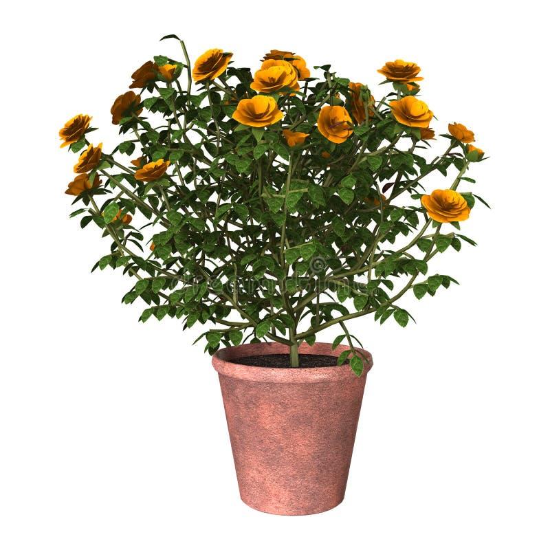 Arbusto color de rosa anaranjado stock de ilustración