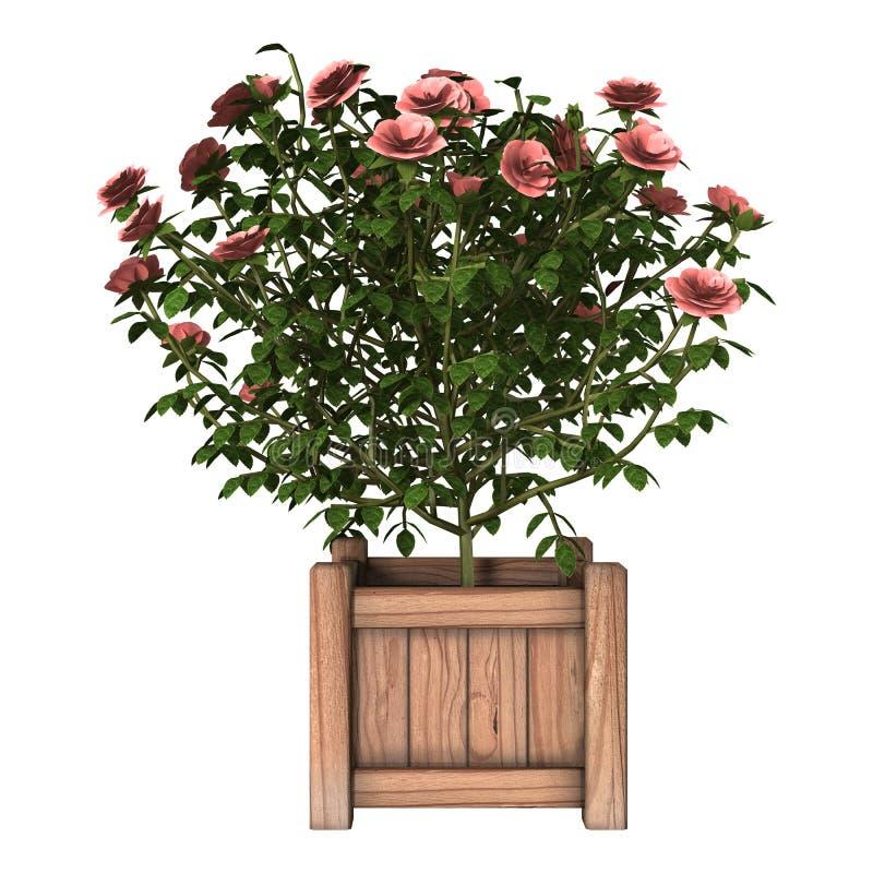 Arbusto color de rosa rosado libre illustration
