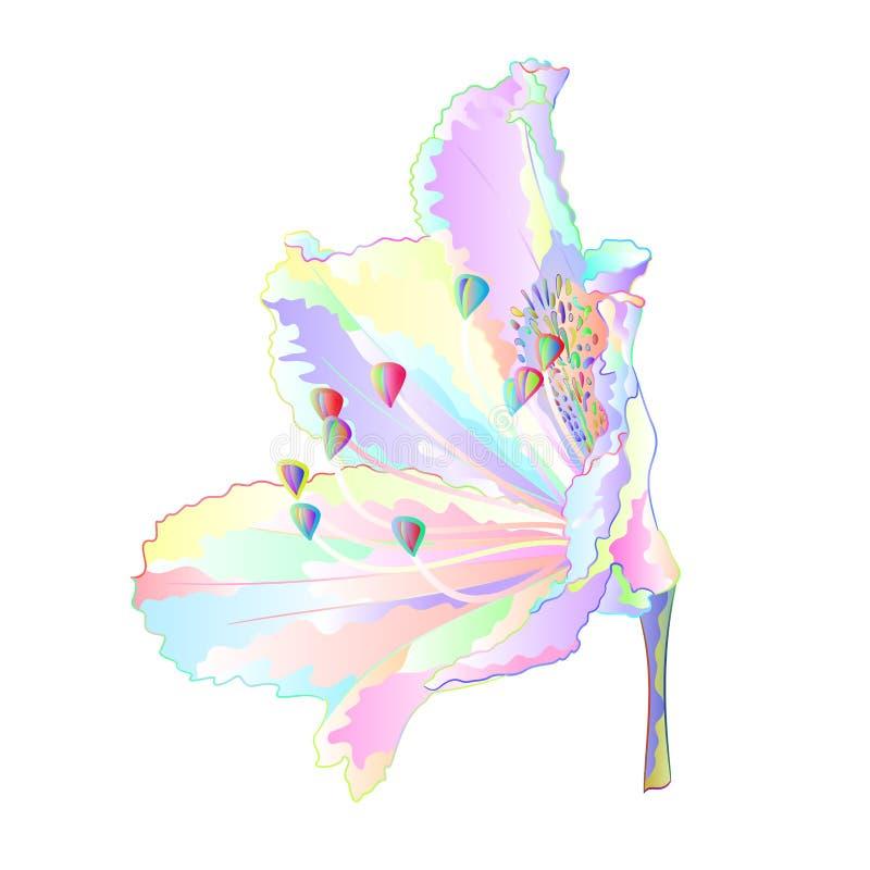 Arbusto colorido da montanha da flor do rododendro multi em uma ilustração branca do vetor do vintage do fundo editável ilustração royalty free