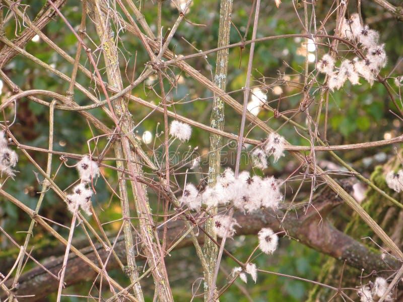 Arbusto con i fiori bianchi fotografia stock libera da diritti