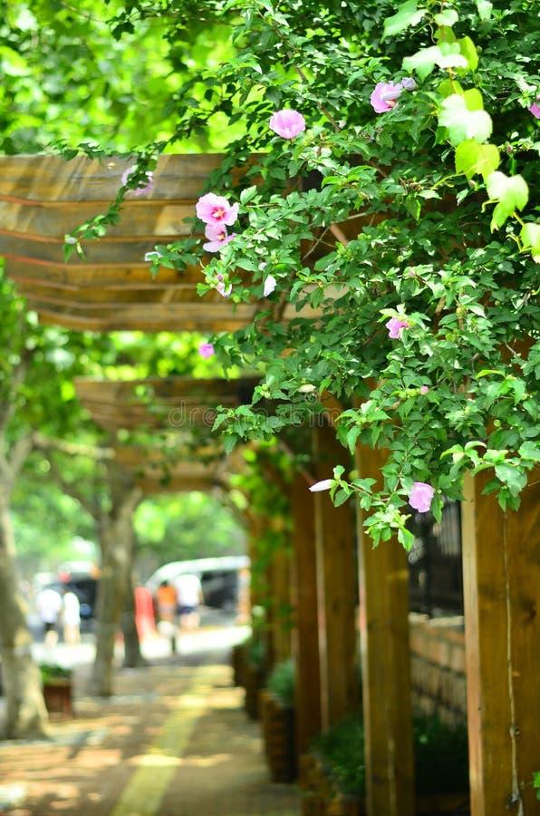 Arbusto da flor em QingDao, China foto de stock royalty free