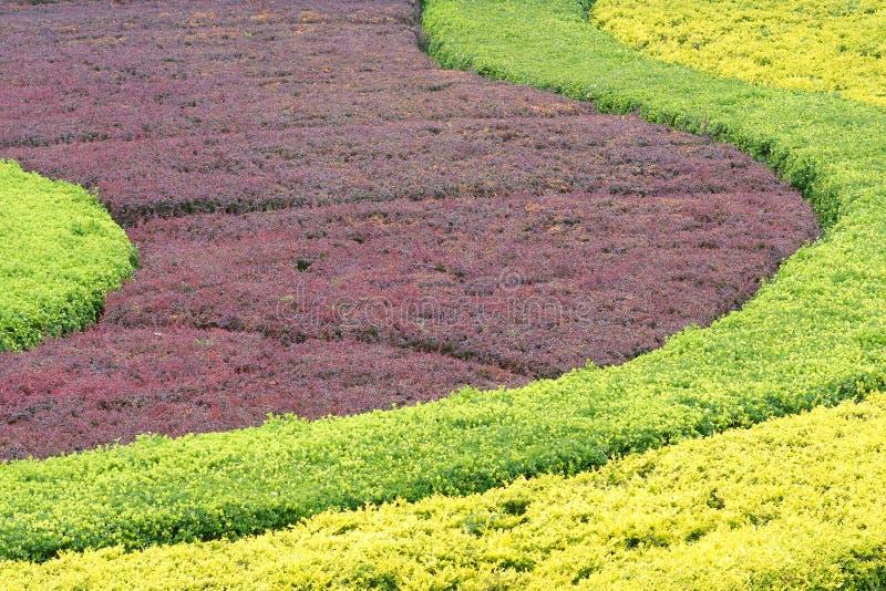 Arbusto de Colorized imagen de archivo libre de regalías
