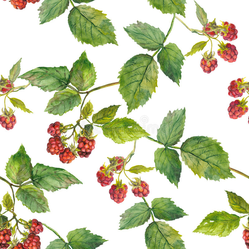 arbusto de frambuesa en la plantilla inconsútil blanca libre illustration