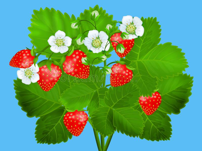 Arbusto de fresa stock de ilustración