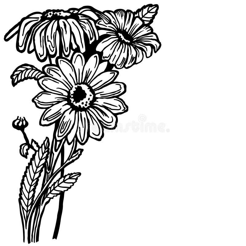 Arbusto de margarida ilustração royalty free