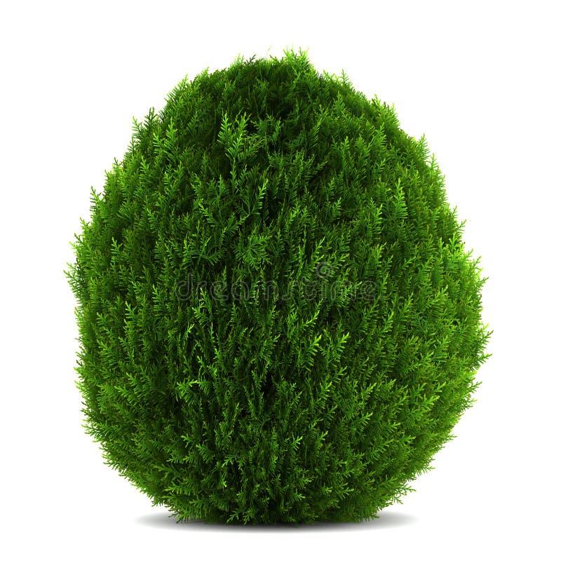 Arbusto del este del arborvitae aislado en blanco ilustración del vector