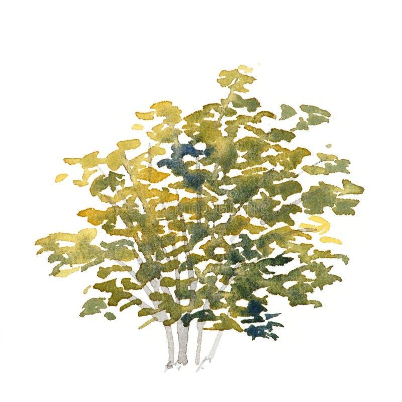 Arbusto dell'acquerello fotografie stock libere da diritti