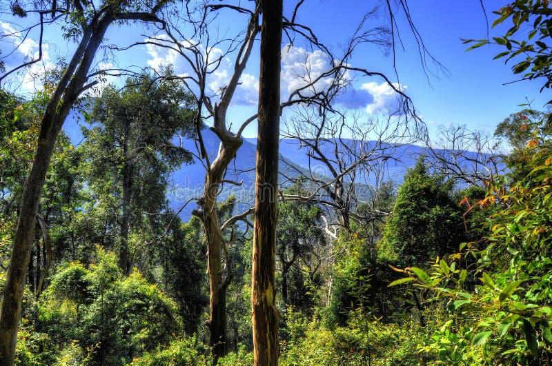 Arbusto denso en montañas azules imagen de archivo libre de regalías