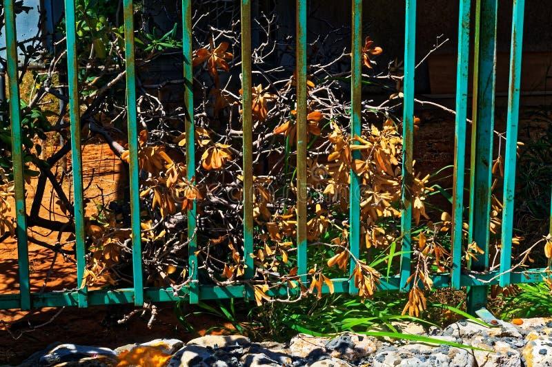 Arbusto deteriorado com folhas amarelas fotografia de stock