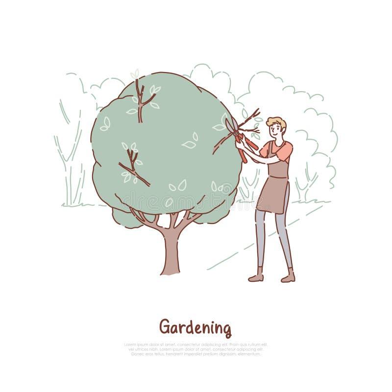 Arbusto do corte do homem novo, indivíduo no avental que guarda tesouras, cuidado da planta, trabalhador de jardinagem do serviço ilustração do vetor