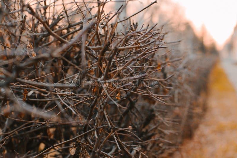 Arbusto do outono foto de stock