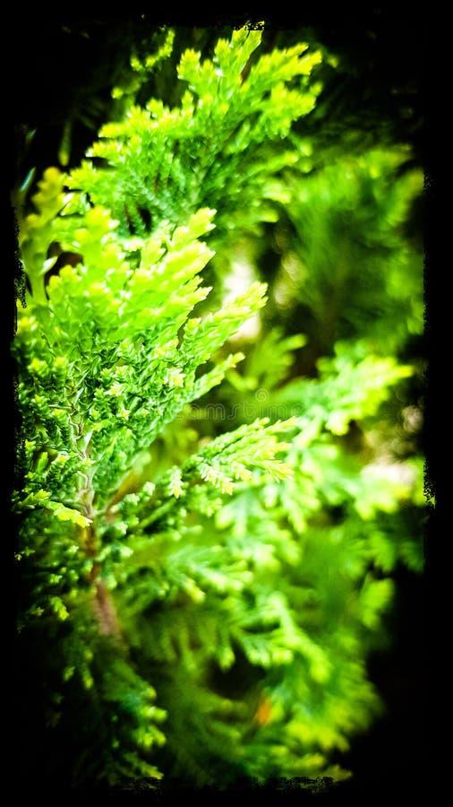 Arbusto e lago bonitos! imagens de stock