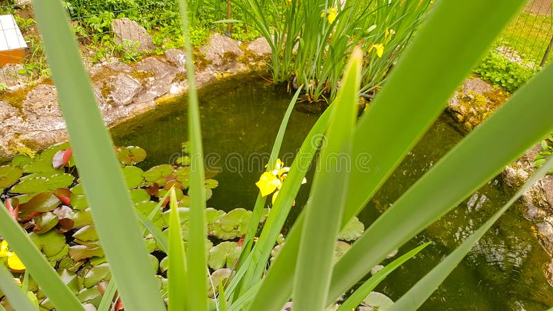 Arbusto e lago bonitos! fotografia de stock royalty free