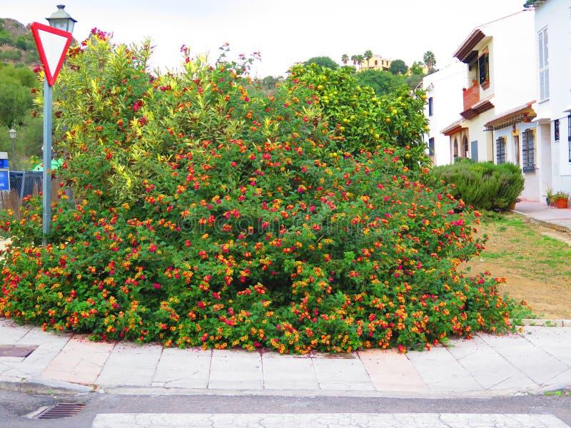 Arbusto español de la bandera fotografía de archivo