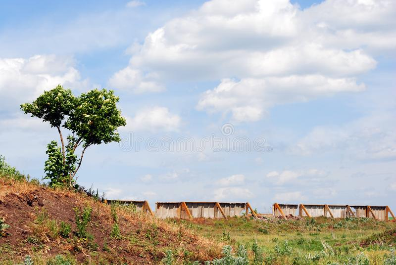 Arbusto floreciente de la baya del saúco en una colina verde del prado, a lo largo de la pared que desmenuza concreta vieja del h fotografía de archivo