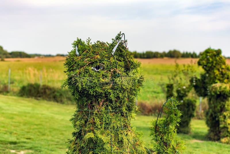 Arbusto formado cabeza del gato fotos de archivo