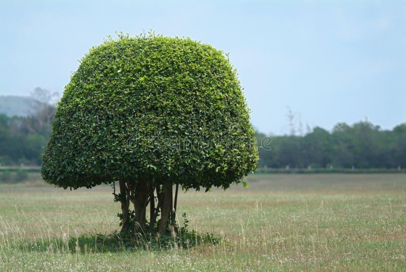 Arbusto formado en el campo fotografía de archivo