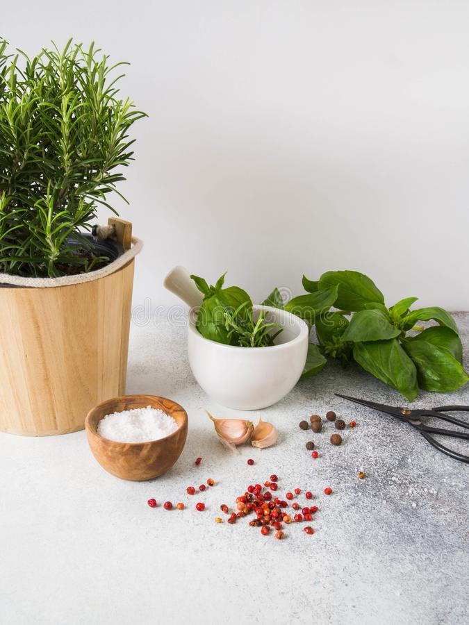 Arbusto fresco dos alecrins em uns potenciômetros de madeira, uns galhos da manjericão verde fresca, almofariz branco com pilão,  foto de stock royalty free
