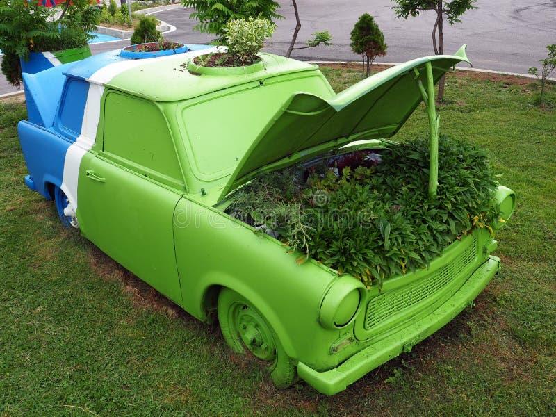 Arbusto frondoso verde que cresce no carro azul, branco e verde do vintage, Bulgária fotos de stock royalty free