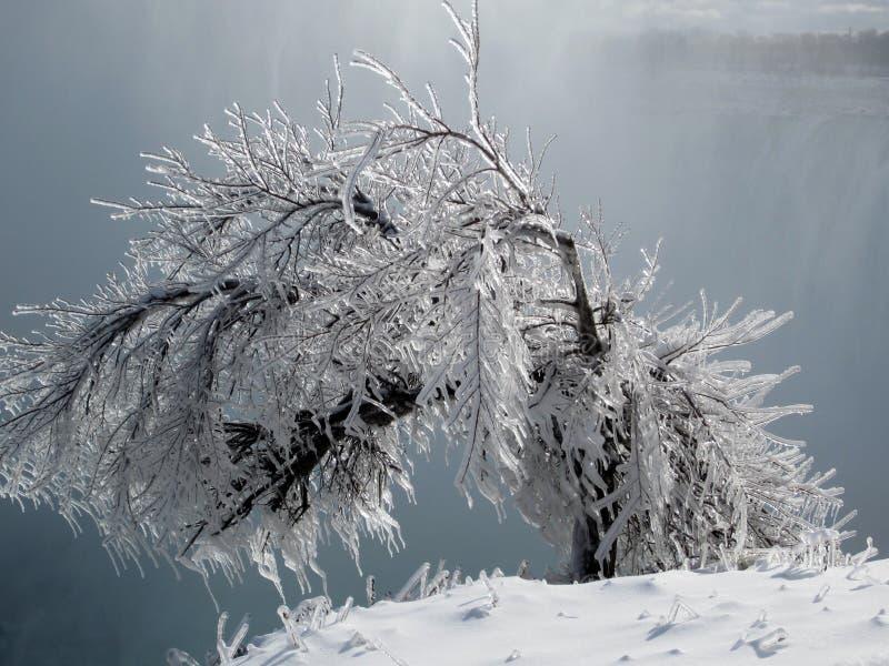 Arbusto helado, Niagara Falls, Ontario Canadá imagen de archivo libre de regalías
