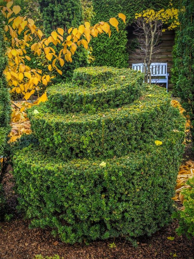 Arbusto imperecedero de lujo fotografía de archivo libre de regalías