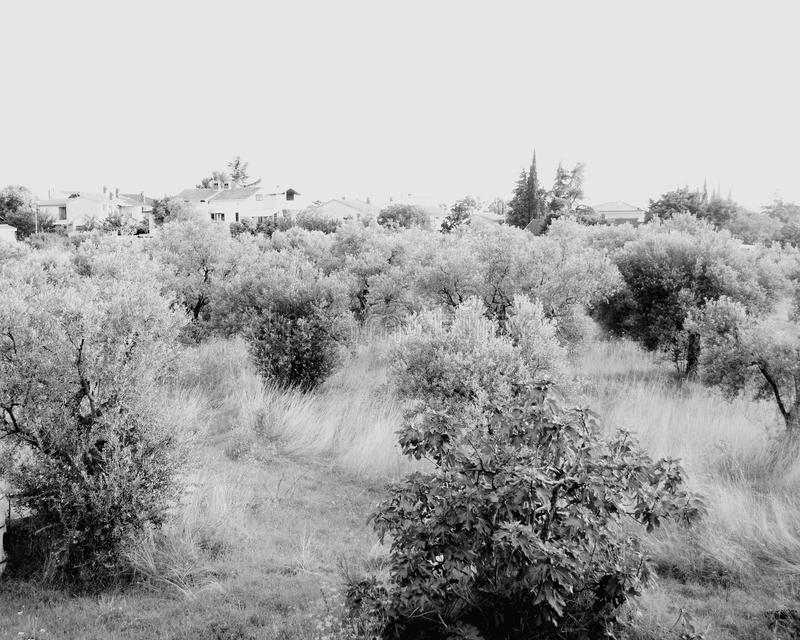 Arbusto mediterráneo urbano imagen de archivo