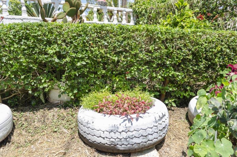 Arbusto que cerca dividiendo el jardín de flores imágenes de archivo libres de regalías